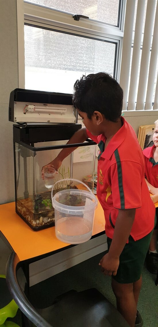 Caring for our tadpoles